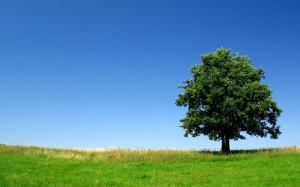 Tree-background-1000